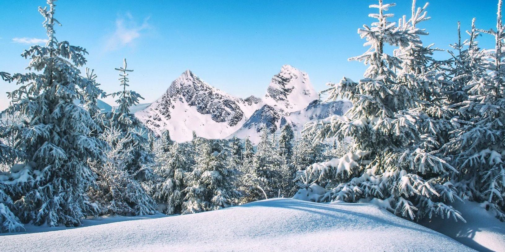 Besneeuwde bomen bergen