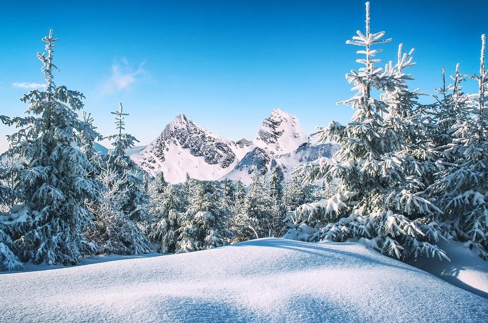 Besneeuwde bomen bergen wintersportdeluxe