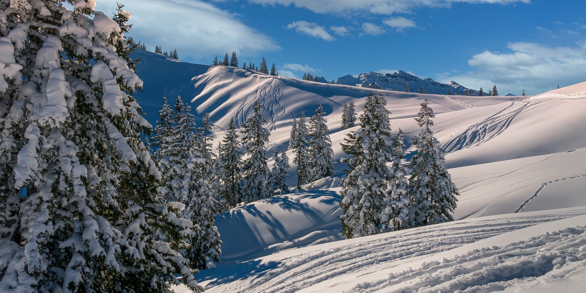 Zwitserland ski besneeuwde bomen